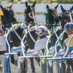 Requirements for Trainers, Drivers and Grooms – SHRC
