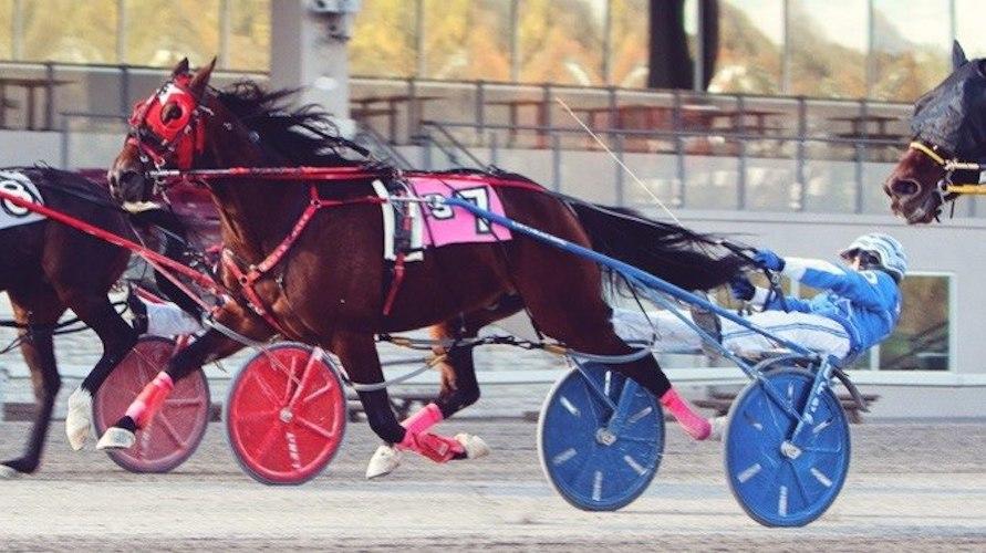 Phoenix Warrior N named Horse of the Year