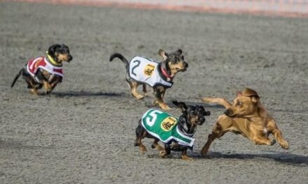 "Wiener Dog Races, Family Fun Night Kick off ""Adios Season"""