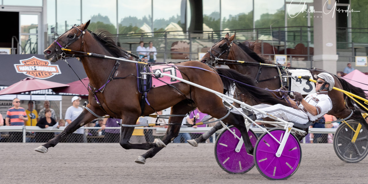 Adios winner Southwind Ozzi returns with PASS victory
